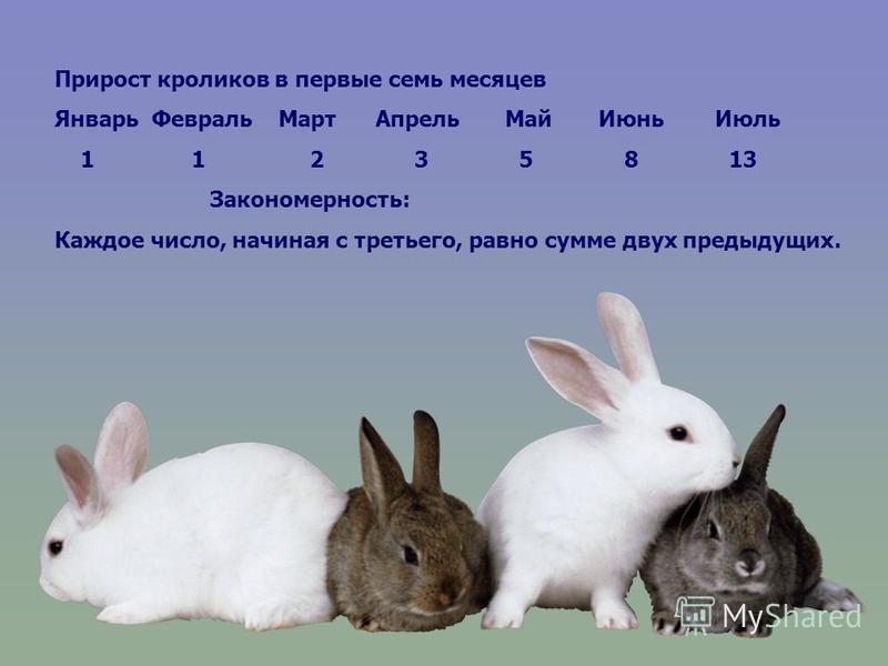 Прирост кроликов в первые семь месяцев Январь Февраль Март Апрель Май Июнь Июль 1 1 2 3 5 8 13 Закономерность: Каждое число, начиная с третьего, равно сумме двух предыдущих.