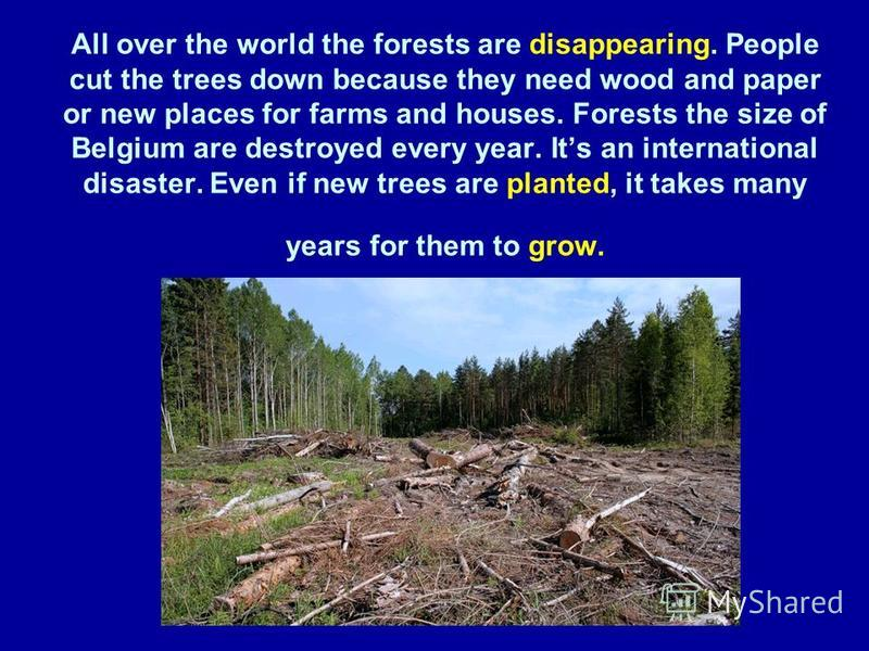 All over the world the forests are disappearing. People cut the trees down because they need wood and paper or new places for farms and houses. Forests the size of Belgium are destroyed every year. Its an international disaster. Even if new trees are