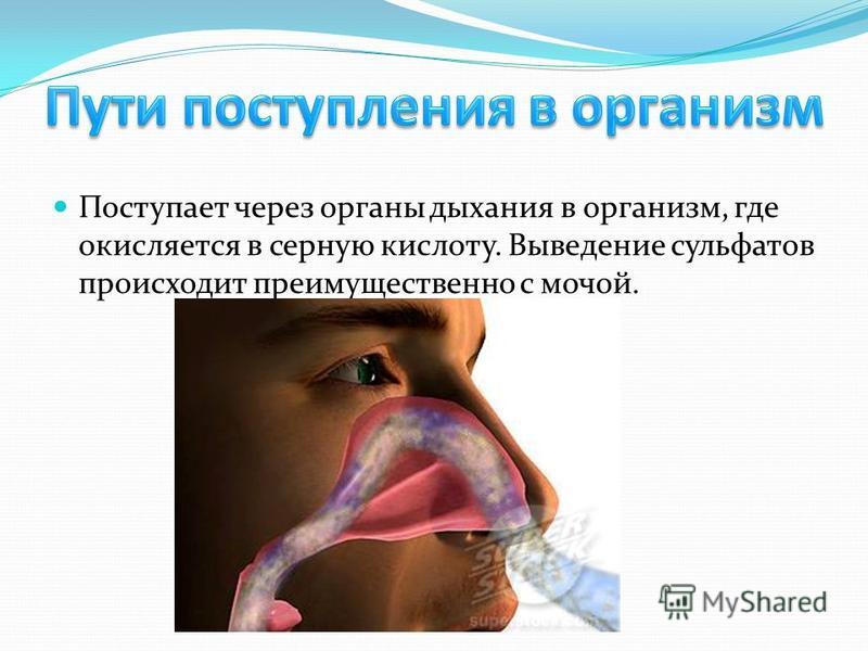 Поступает через органы дыхания в организм, где окисляется в серную кислоту. Выведение сульфатов происходит преимущественно с мочой.