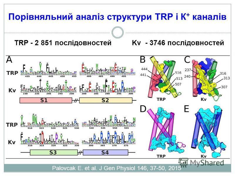 Порівняльний аналіз структури TRP і К + каналів Palovcak E. et al. J Gen Physiol 146, 37-50, 2015 TRP - 2 851 послідовностей Kv - 3746 послідовностей