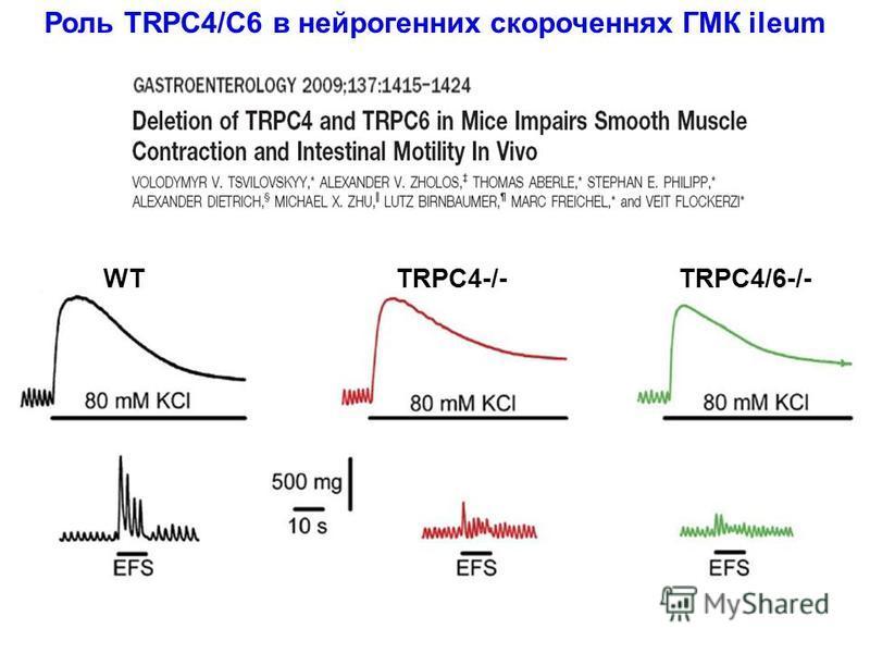 Роль TRPC4/C6 в нейрогенних скороченнях ГМК ileum WT TRPC4-/- TRPC4/6-/-