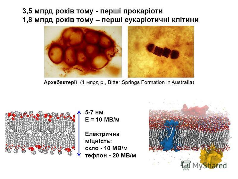 3,5 млрд років тому - перші прокаріоти 1,8 млрд років тому – перші еукаріотичні клітини Архебактерії (1 млрд р., Bitter Springs Formation in Australia) 5-7 нм Е = 10 МВ/м Електрична міцність: скло - 10 МВ/м тефлон - 20 МВ/м