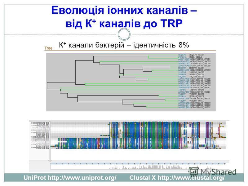 Еволюція іонних каналів – від К + каналів до TRP К + канали бактерій – ідентичність 8% UniProt http://www.uniprot.org/ Clustal X http://www.clustal.org/
