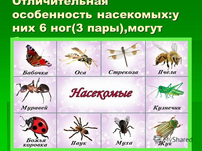 Отличительная особенность насекомых:у них 6 ног(3 пары),могут быть крылья.