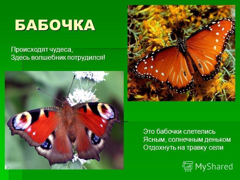 БАБОЧКА Происходят чудеса, Здесь волшебник потрудился! Это бабочки слетелись Ясным, солнечным деньком Отдохнуть на травку сели