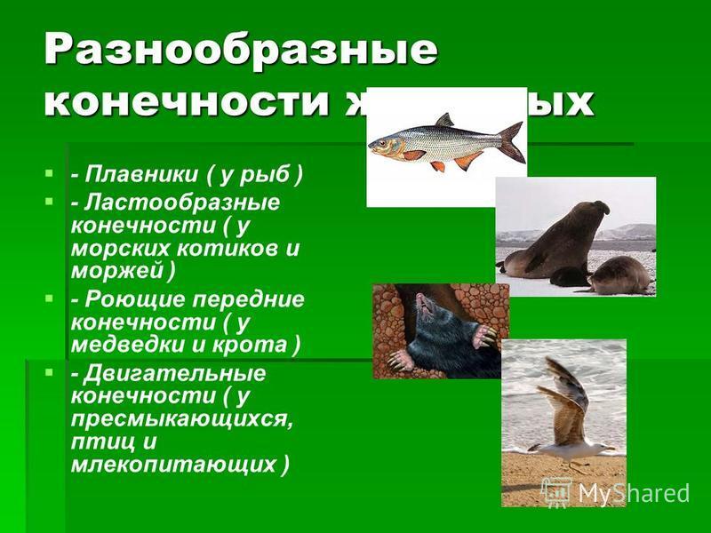 Разнообразные конечности животных - Плавники ( у рыб ) - Ластообразные конечности ( у морских котиков и моржей ) - Роющие передние конечности ( у медведки и крота ) - Двигательные конечности ( у пресмыкающихся, птиц и млекопитающих )