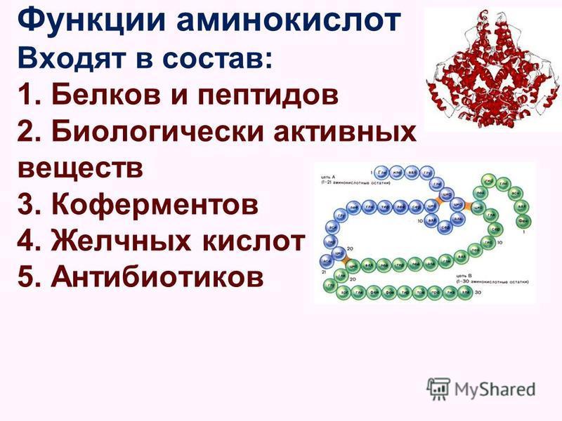 Функции аминокислот Входят в состав: 1. Белков и пептидов 2. Биологически активных веществ 3. Коферментов 4. Желчных кислот 5. Антибиотиков