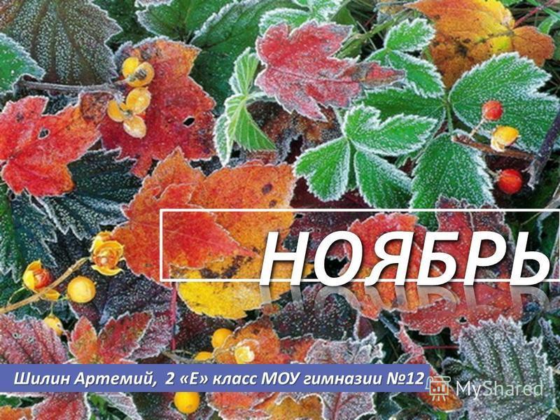 Шилин Артемий, 2 «Е» класс МОУ гимназии 12