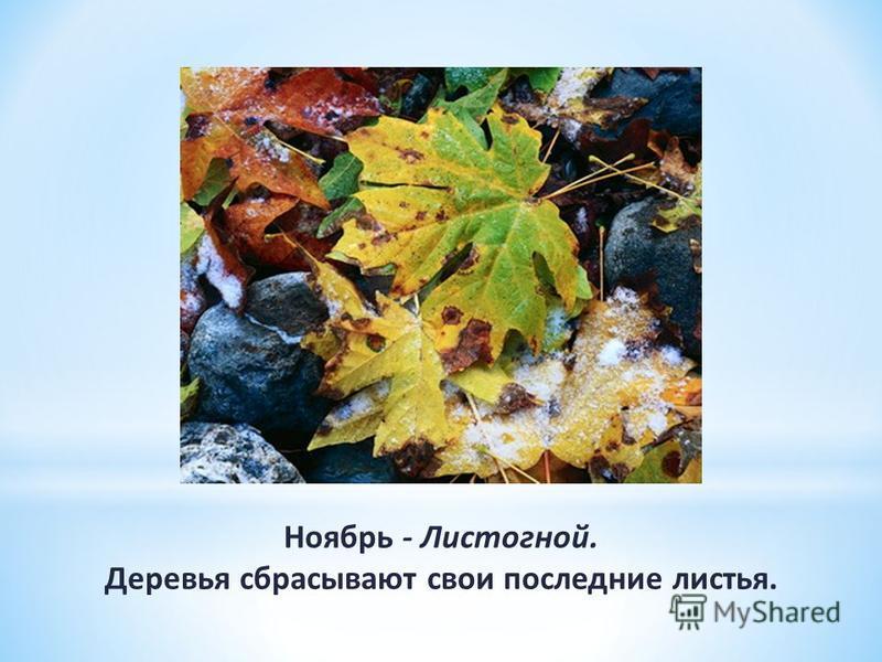 Ноябрь - Листогной. Деревья сбрасывают свои последние листья.