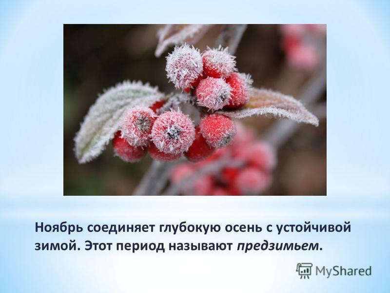 Ноябрь соединяет глубокую осень с устойчивой зимой. Этот период называют предзимьем.