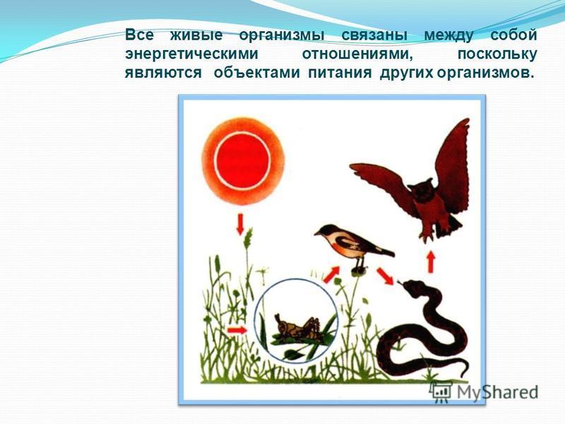 Все живые организмы связаны между собой энергетическими отношениями, поскольку являются объектами питания других организмов.