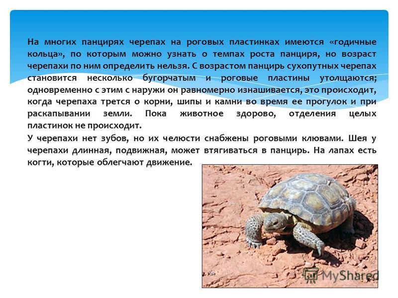 На многих панцирях черепах на роговых пластинках имеются «годичные кольца», по которым можно узнать о темпах роста панциря, но возраст черепахи по ним определить нельзя. С возрастом панцирь сухопутных черепах становится несколько бугорчатым и роговые