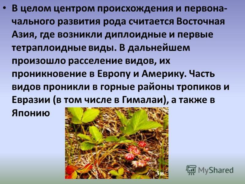 В целом центром происхождения и первона чального развития рода считается Восточная Азия, где возникли диплоидные и первые тетраплоидные виды. В дальнейшем произошло расселение видов, их проникновение в Европу и Америку. Часть видов проникли в горны