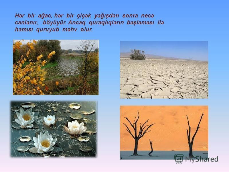 Hər bir ağac, hər bir çiçək yağışdan sonra necə canlanır, böyüyür. Ancaq quraqlıqların başlaması ilə hamısı quruyub məhv olur.