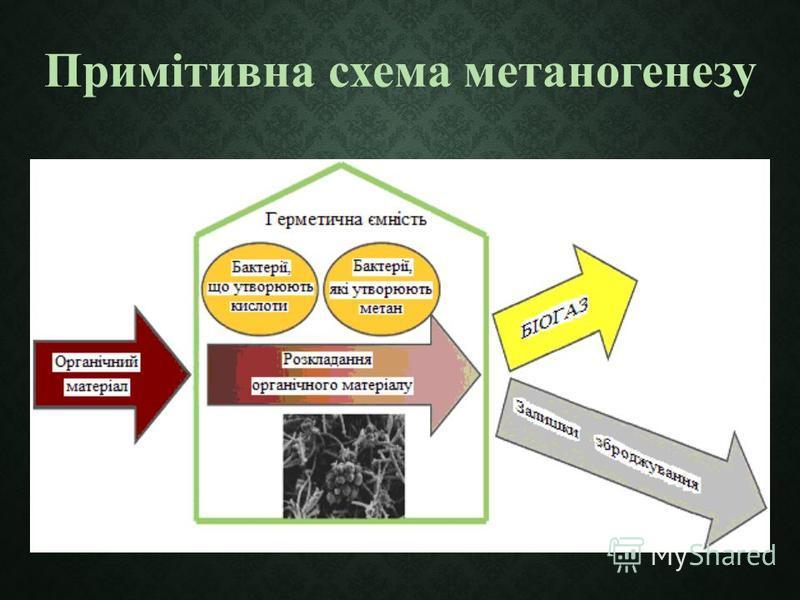 Примітивна схема метаногенезу