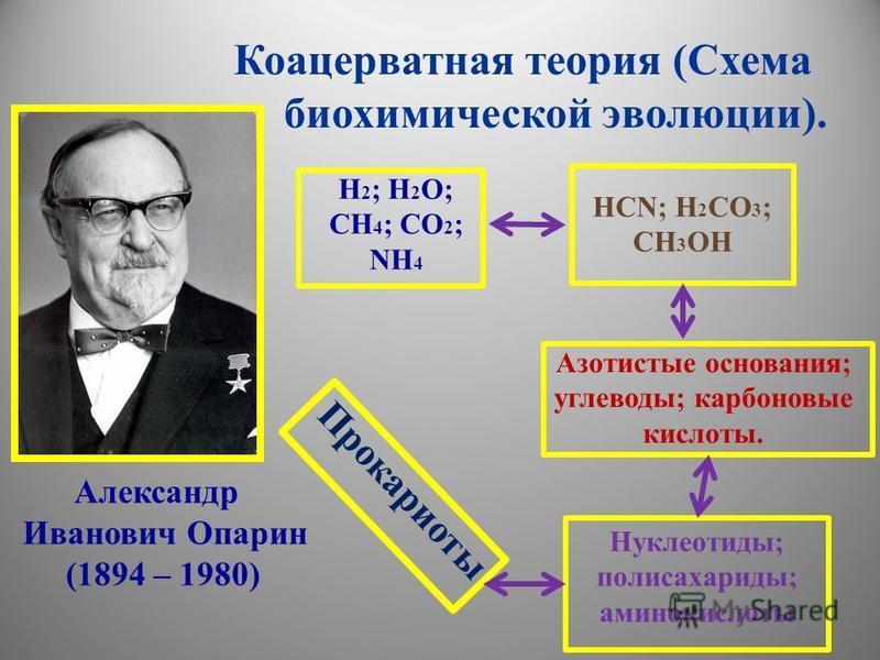 Коацерватная теория (Схема биохимической эволюции). Н 2 ; Н 2 О; СН 4 ; СО 2 ; NH 4 HCN; H 2 CO 3 ; CH 3 OH Азотистые основания; углеводы; карбоновые кислоты. Нуклеотиды; полисахариды; аминокислоты Прокариоты Александр Иванович Опарин (1894 – 1980)