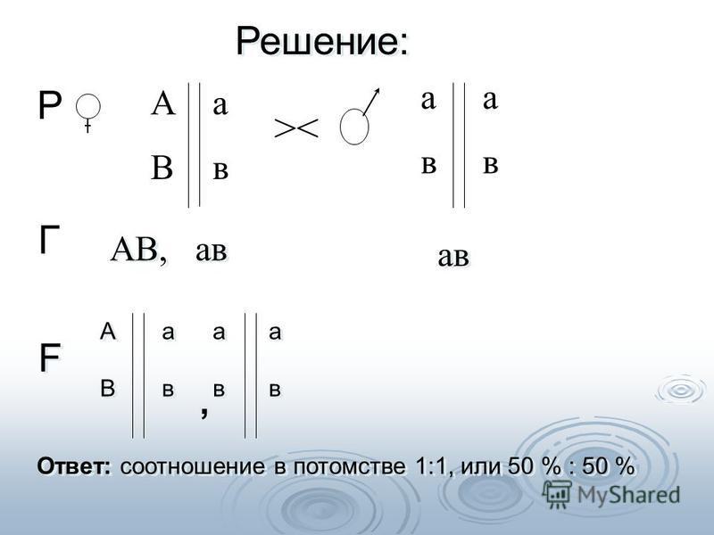 >< Р Г АВАВ ава ава Решение: F F АВ, ав ав АВАВ АВАВ ава ава ава ава ава ава ава Ответ: соотношение в потомстве 1:1, или 50 % : 50 %,,