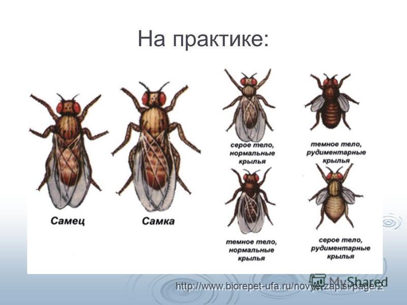 На практике: http://www.biorepet-ufa.ru/novye-zapisi/page/2