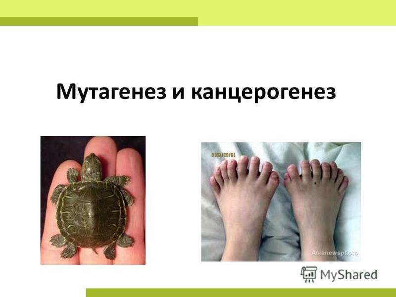 Мутагенез и канцерогенез