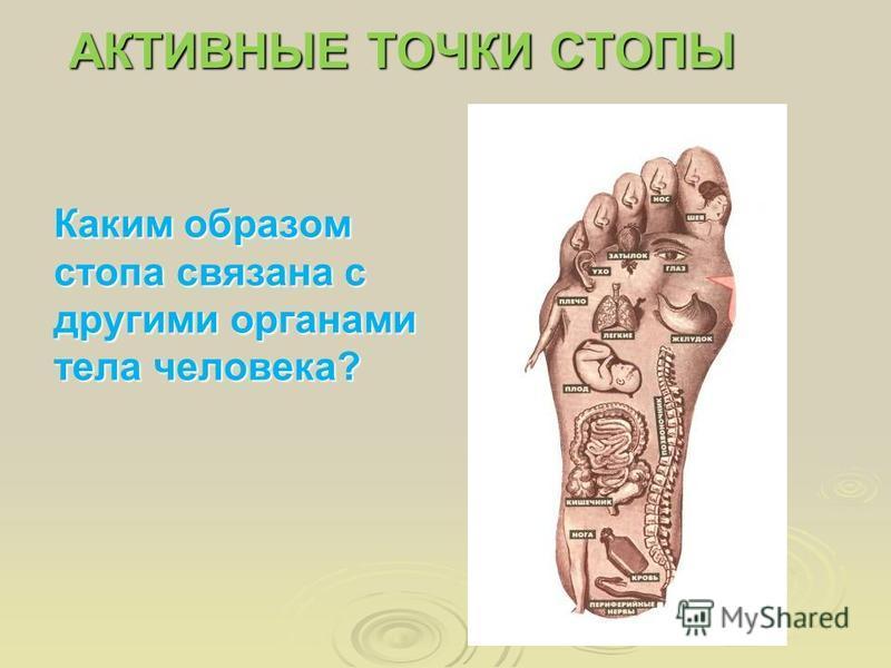 Каким образом стопа связана с другими органами тела человека? АКТИВНЫЕ ТОЧКИ СТОПЫ