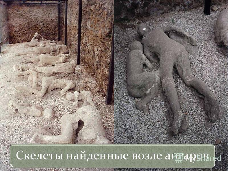 Скелеты найденные возле ангаров