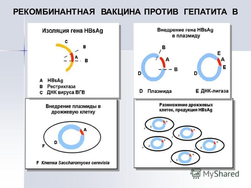 РЕКОМБИНАНТНАЯ ВАКЦИНА ПРОТИВ ГЕПАТИТА В