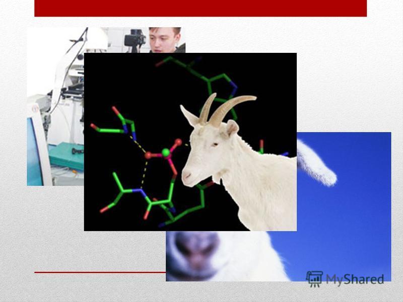 «Бел РосТрансген-2». «Бел РосТрансген-2». Цель программы: разработка технологий получения лекарственных средств нового поколения и пищевых продуктов и организация опытных производств на основе результатов, полученных при реализации программы «Бел Рос