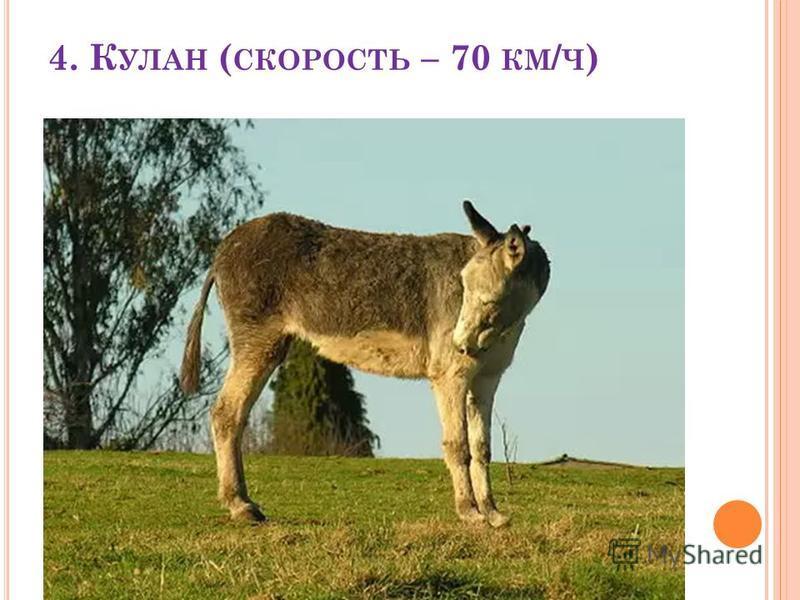 4. К УЛАН ( СКОРОСТЬ – 70 КМ / Ч )