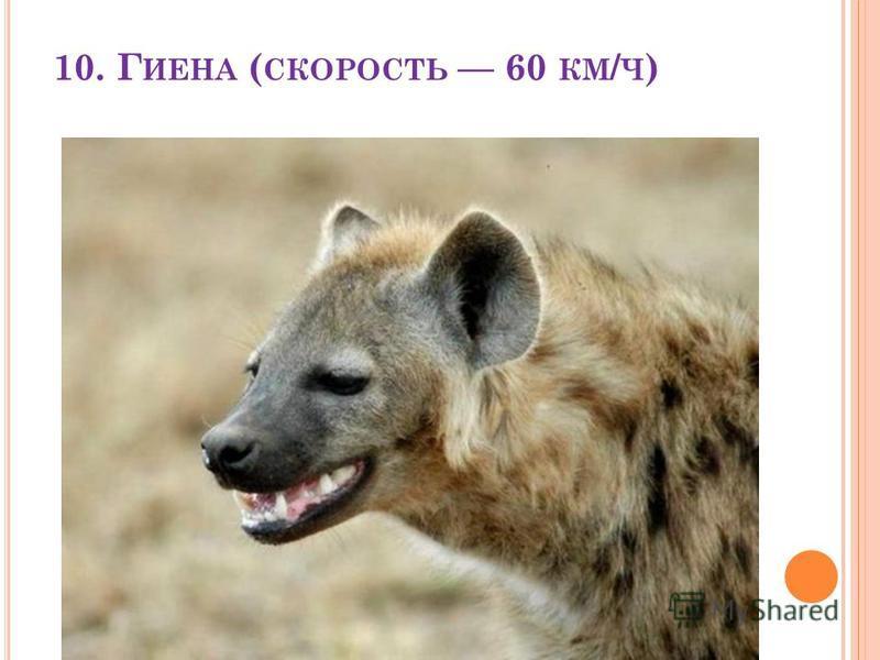 10. Г ИЕНА ( СКОРОСТЬ 60 КМ / Ч )