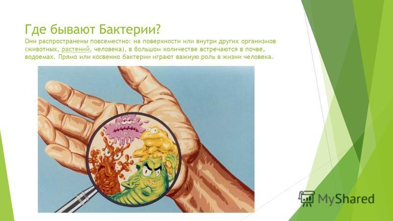 Где бывают Бактерии? Они распространены повсеместно: на поверхности или внутри других организмов (животных, растений, человека), в большом количестве встречаются в почве, водоемах. Прямо или косвенно бактерии играют важную роль в жизни человека.расте