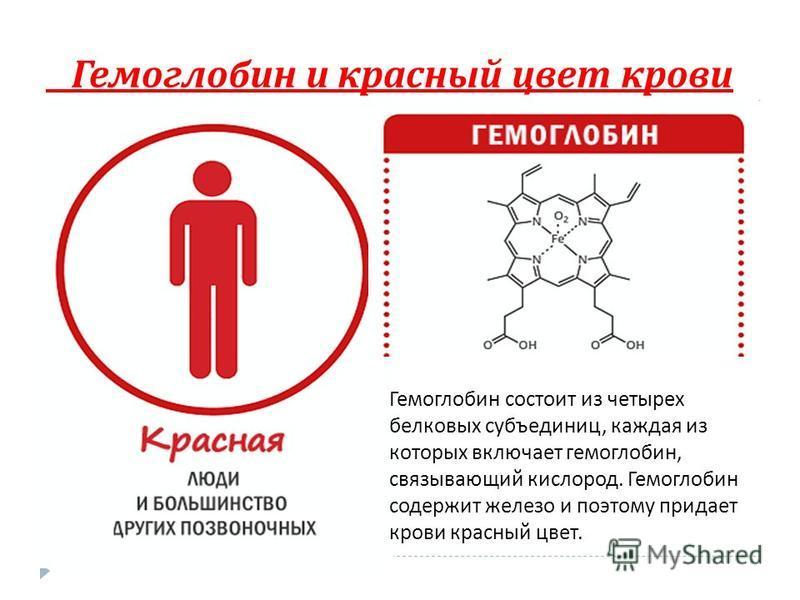 Гемоглобин и красный цвет крови Гемоглобин состоит из четырех белковых субъединиц, каждая из которых включает гемоглобин, связывающий кислород. Гемоглобин содержит железо и поэтому придает крови красный цвет.
