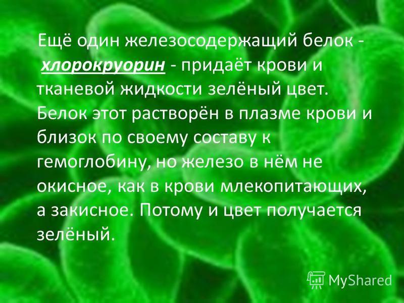 Ещё один железосодержащий белок - хлорокруорин - придаёт крови и тканевой жидкости зелёный цвет. Белок этот растворён в плазме крови и близок по своему составу к гемоглобину, но железо в нём не окисное, как в крови млекопитающих, а закисное. Потому и