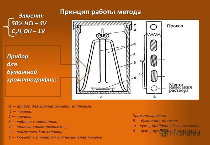 А прибор для хроматографии на бумаге: 1 камера: 2 крышка; 3 лодочка с элюентом; 4 полоски хроматограммы; 5 подставка для лодочки; 6 кювета с элюентом для насыщения камеры Прибордлябумажнойхроматографии: Хроматограмма: Б бумажная полоска; апуть, пройд