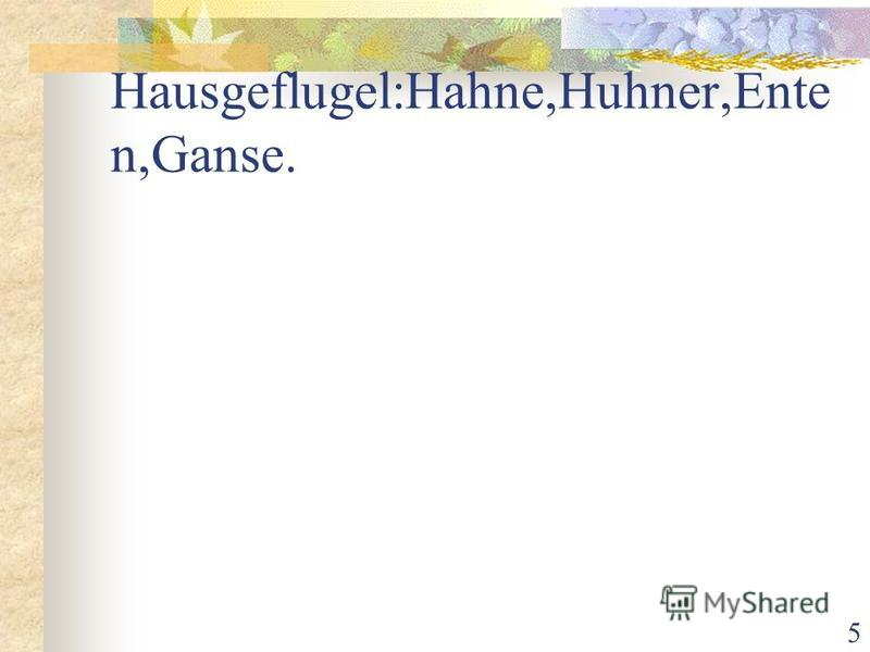 5 Hausgeflugel:Hahne,Huhner,Ente n,Ganse.