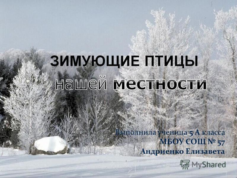 Выполнила ученица 5 А класса МБОУ СОШ 57 Андриенко Елизавета