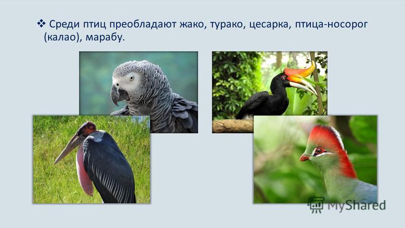 Среди птиц преобладают жако, турако, цесарка, птица-носорог (калао), марабу.