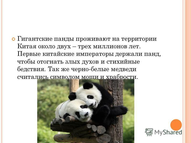 Гигантские панды проживают на территории Китая около двух – трех миллионов лет. Первые китайские императоры держали панд, чтобы отогнать злых духов и стихийные бедствия. Так же черно-белые медведи считались символом мощи и храбрости.