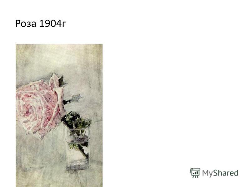 Роза 1904 г
