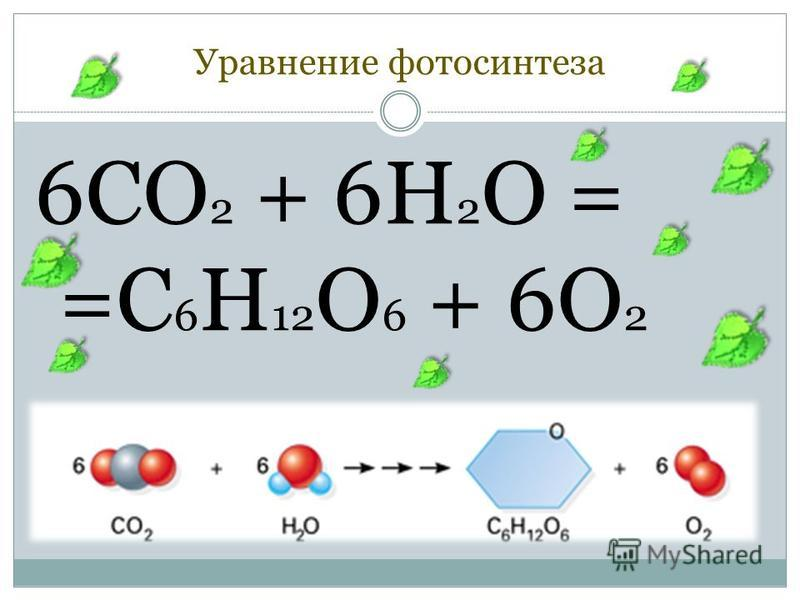 Уравнение фотосинтеза 6CO 2 + 6H 2 O = =C 6 H 12 O 6 + 6O 2