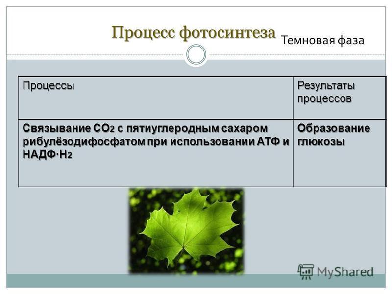 Процессы Результаты процессов Связывание CO 2 с пяти углеродным сахаром рибулёзодифосфатом при использовании АТФ и НАДФ·H 2 Образование глюкозы Процесс фотосинтеза Темновая фаза