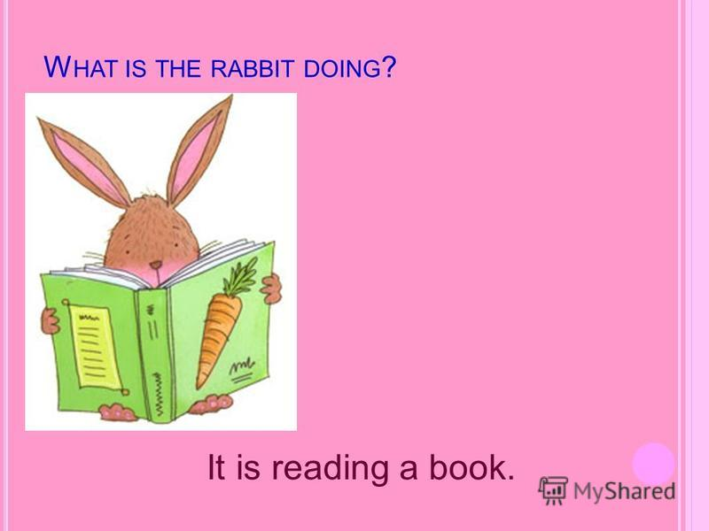 W HAT IS THE RABBIT DOING ? It is reading a book.