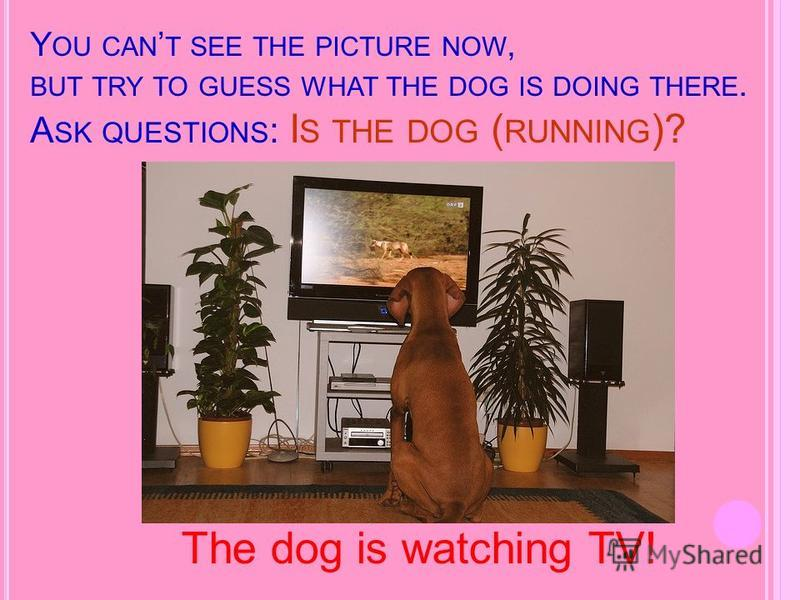 Y OU CAN T SEE THE PICTURE NOW, BUT TRY TO GUESS WHAT THE DOG IS DOING THERE. A SK QUESTIONS : I S THE DOG ( RUNNING )? The dog is watching TV!