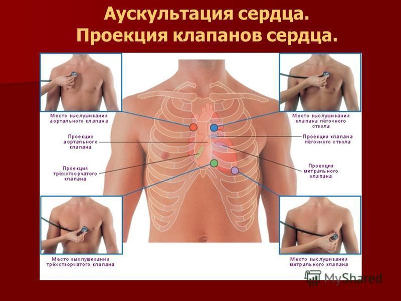 Аускультация сердца. Проекция клапанов сердца.