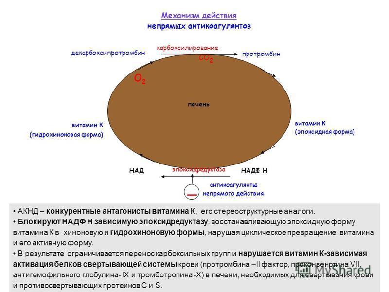 витамин К (гидрохиноновая форма) витамин К (эпоксидная форма) эпоксидредуктаза антикоагулянты непрямого действия _ О2О2 декарбоксипротромбин протромбин карбоксилирование СО 2 НАДФ ННАД Механизм действия непрямых антикоагулянтов АКНД – конкурентные ан