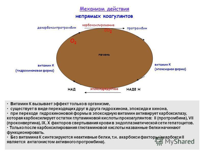 витамин К (гидрохиноновая форма) витамин К (эпоксидная форма) эпоксидредуктаза О2О2 декарбоксипротромбин протромбин карбоксилирование СО 2 НАДФ ННАД Механизм действия непрямых коагулянтов Витамин К вызывает эффект только в организме, существует в вид