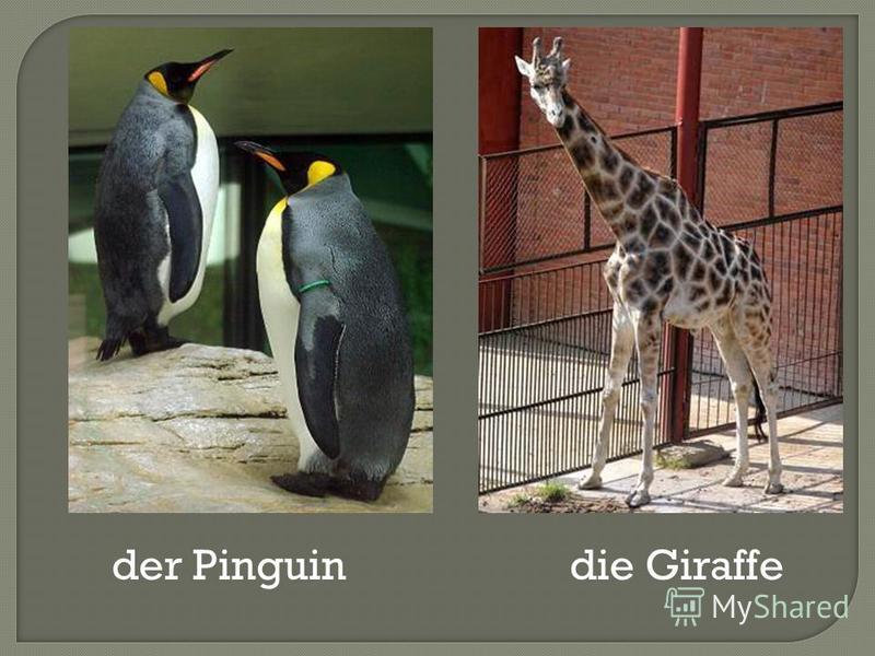 der Pinguindie Giraffe