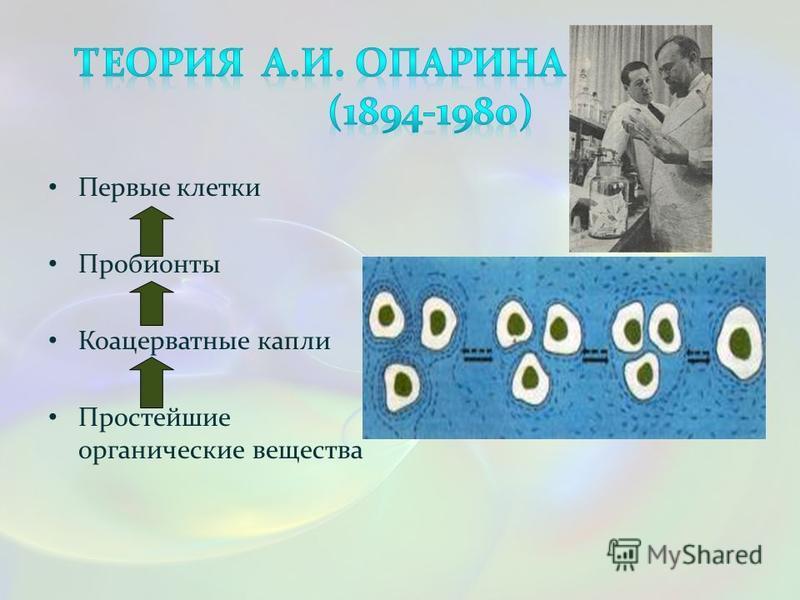 Первые клетки Пробионты Коацерватные капли Простейшие органические вещества