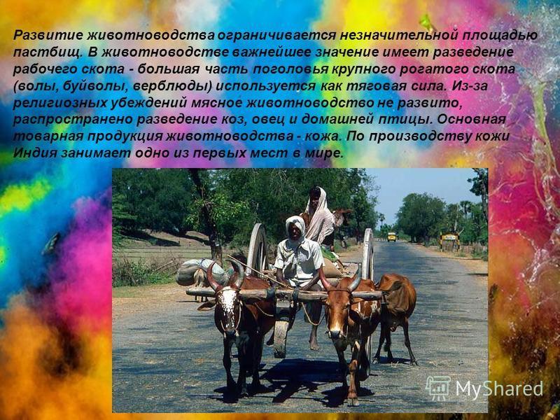 Развитие животноводства ограничивается незначительной площадью пастбищ. В животноводстве важнейшее значение имеет разведение рабочего скота - большая часть поголовья крупного рогатого скота (волы, буйволы, верблюды) используется как тяговая сила. Из-