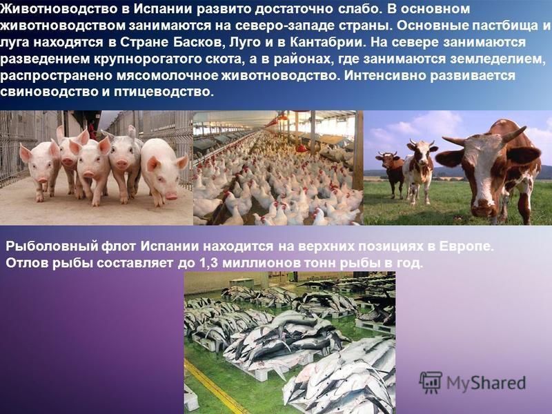 Животноводство в Испании развито достаточно слабо. В основном животноводством занимаются на северо-западе страны. Основные пастбища и луга находятся в Стране Басков, Луго и в Кантабрии. На севере занимаются разведением крупнорогатого скота, а в район
