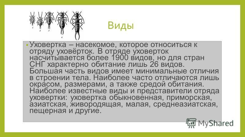 Виды Уховертка – насекомое, которое относиться к отряду уховёрток. В отряде уховерток насчитывается более 1900 видов, но для стран СНГ характерно обитание лишь 26 видов. Большая часть видов имеет минимальные отличия в строении тела. Наиболее часто от